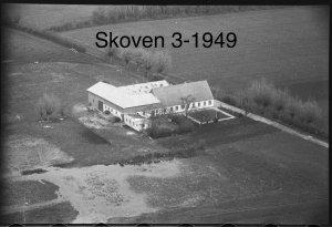 Skoven 3 - 1949